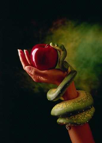 forbidden fruit t r paulsen